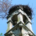 na vrhu tornja gnijezde se rode